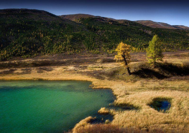 алтай, горы, осень Золото Алтаяphoto preview