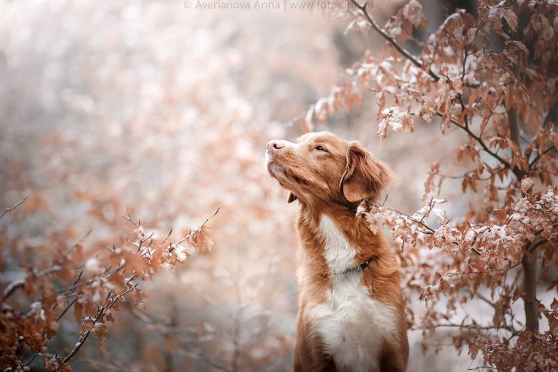 собака, природа, снег, осень photo preview