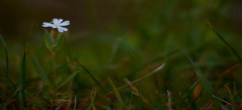 осень, природа, беларусь, лес Картинки из осеннего леса 6.photo preview
