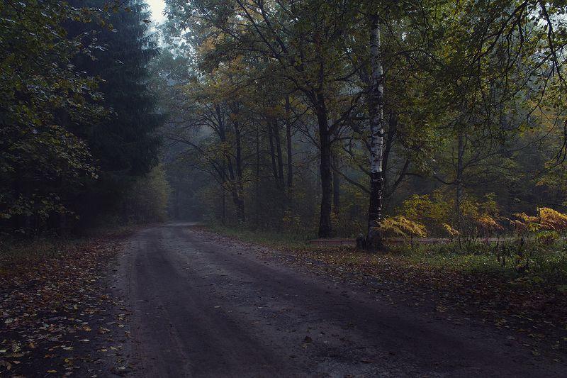 брянск, круглое озеро, алексей платонов, осень, туман, утро,дорога Осенняя дорогаphoto preview