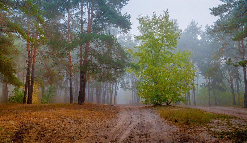 лес осень октябрь тропа туман Вслед за летом приходит осеньphoto preview