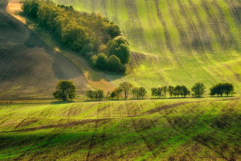 landscape, moravia, tree, south Magic treephoto preview