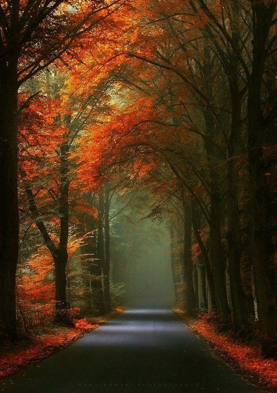 autumn tunnel road trees magic mist foggy droga path Autumn tunnelphoto preview