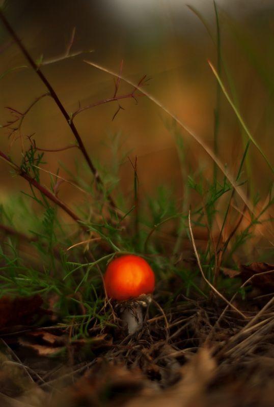 осень, природа, беларусь, лес Картинки из осеннего леса 7.photo preview