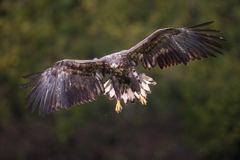 Eaglephoto preview