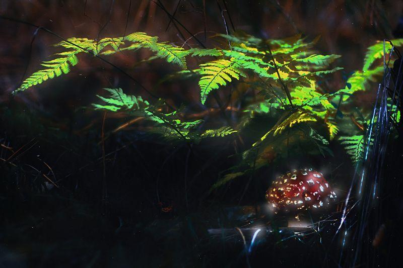гриб,ветки,блики,свет,листва,мох Ближе к утруphoto preview