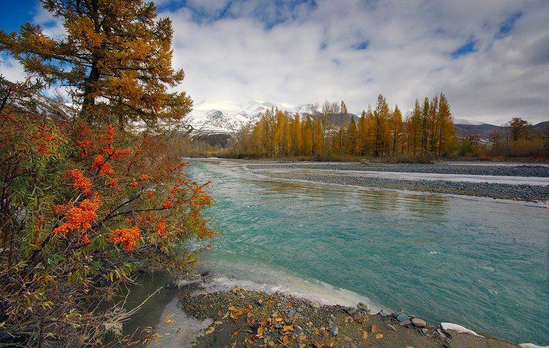 алтай, осень, река, вода, горы, чаган-узун, краски, облепиха, валерий_чичкин Осенние краски Чаган-Узунаphoto preview