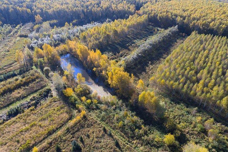 Осенний пруд в Подмосковьеphoto preview