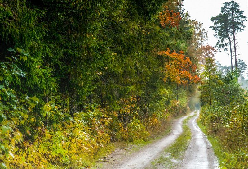 autumn,rain,colors,forest,road What the tired autumn  rain is talking ...photo preview