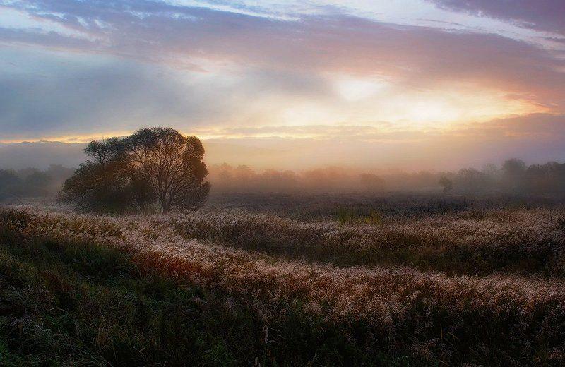 приморский край, солнце, рассвет Утреннее полеphoto preview