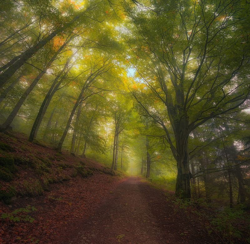 Thuringian forestphoto preview