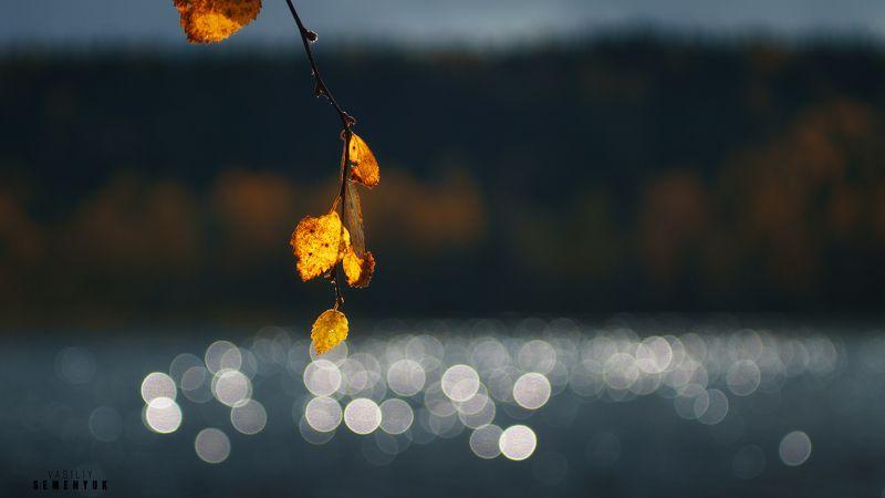 ладога, карелия, осень, листья, золото, свет, блики. Про осеннее Солнце.photo preview