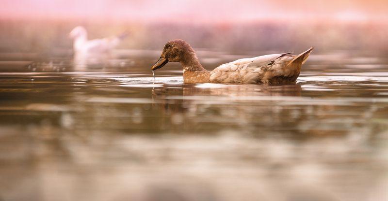 природа, лес, животные, птицы Осеннее настроениеphoto preview
