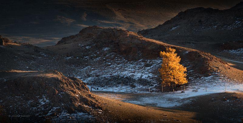 пейзаж, алтай, осень Одиночество осени...photo preview