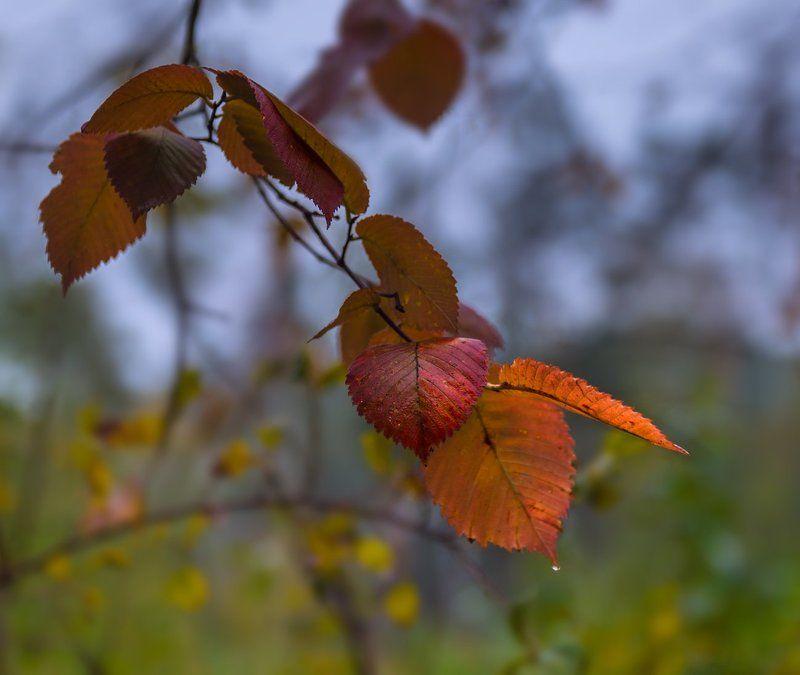 осень, листья, осина photo preview