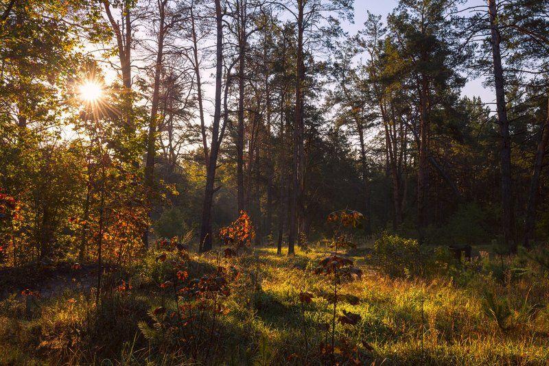 осень, октябрь, лес, утро, рассвет, лучи, солнце Утро осеннее радует глазphoto preview