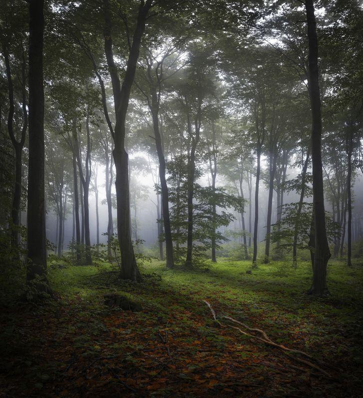 лес, туман, осень, деревья,  Обиталище медведя.photo preview