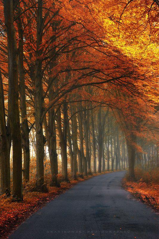autumn corridor road tree tunnel jesien tunel gold leafs dranikowski poland path mist magic autumn corridorphoto preview