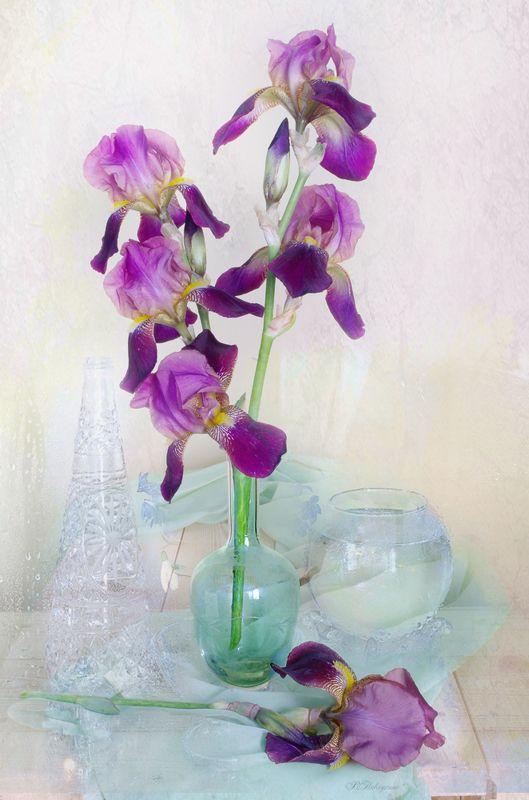ирисы ,букет ,цветы ,вера павлухина , Ирисов хрупкий букетphoto preview