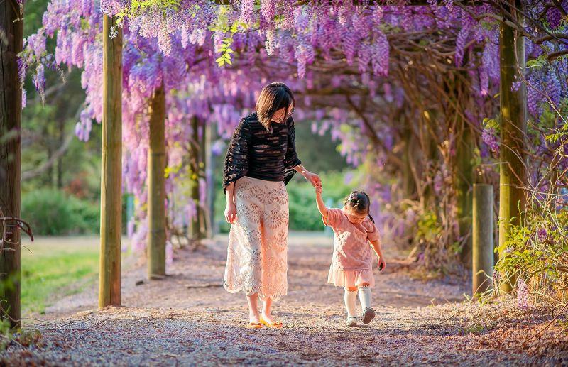 wisteria gardenphoto preview