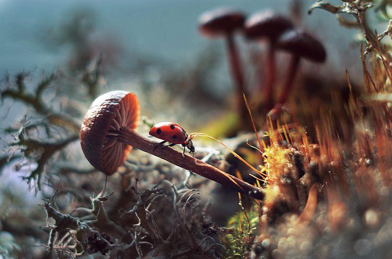 Осенние прогулки божьей коровкиphoto preview