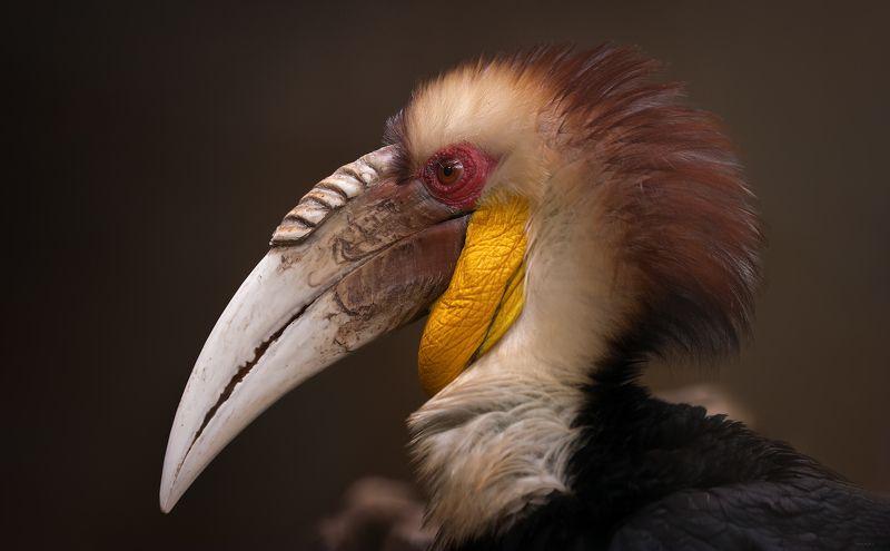 природа, животные, птицы, индонезия Ма́чоphoto preview