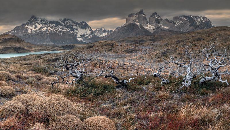 патагония, чили, торрес, patagonia, chile Патагонияphoto preview