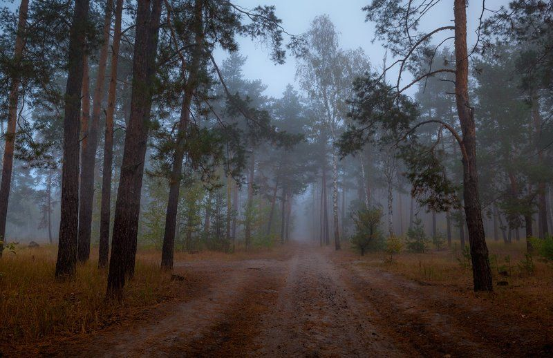 осень, лес, туман Сырая осеньphoto preview