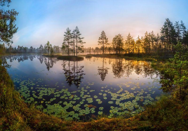 фототур, лето, ленинградская область, деревья, сосна, остров, озеро, рассвет, туман, солнце, отражение,   кувшинки, листья, Лёгкость летаphoto preview