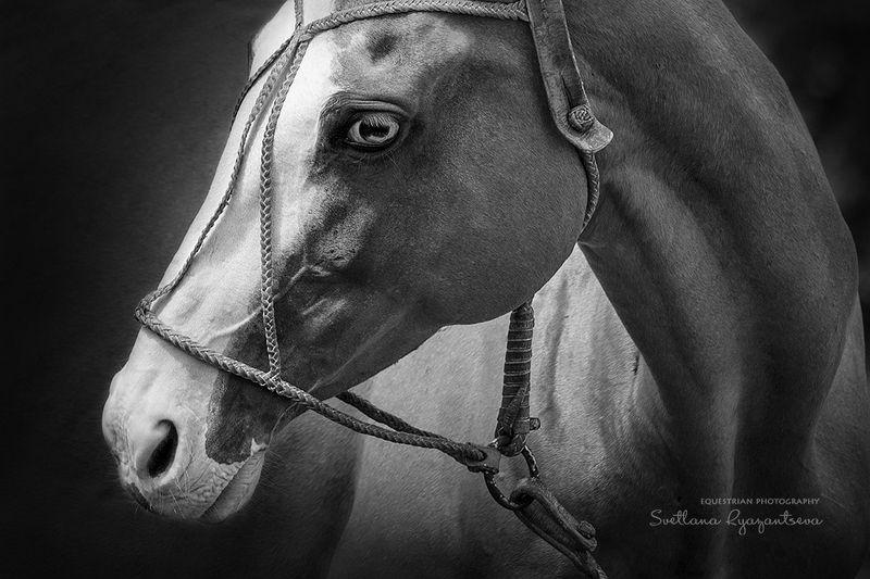 horse, лошадь, лошади, polo, details настроениеphoto preview