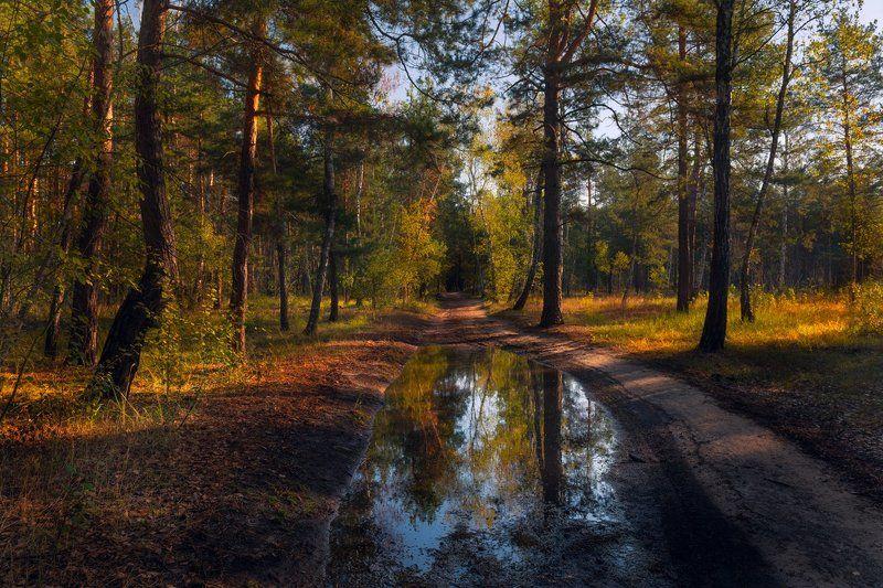 лес, осень, октябрь, тропа, лужа, утро, рассвет Осенним ливнем лес умытphoto preview