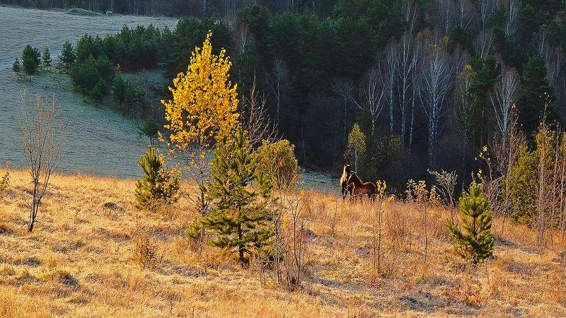 пейзаж, утро, лошади, осень По утру. photo preview