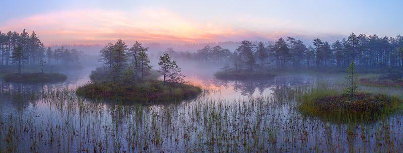 ленинградская область, ленобласть, болото, заря, рассвет \