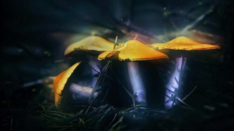 гриб,ветки,блики,свет,листва,мох Все там же в сказкеphoto preview