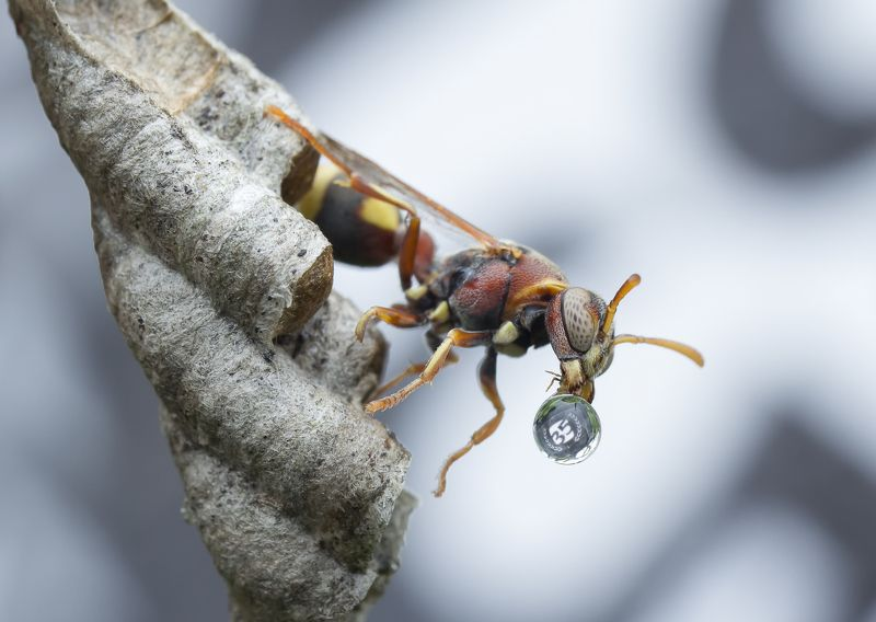 #macro#wasp#reflection#colors#35awards Just For You --- 35AWARDSphoto preview