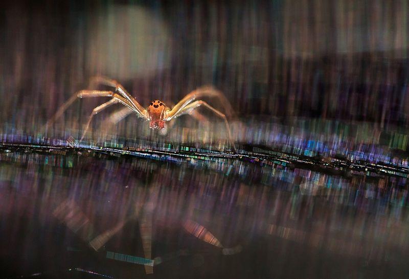 паутина, паук Антиподыphoto preview