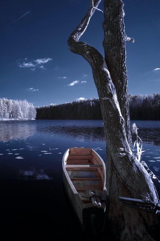 infrared,ик-фото,инфракрасное фото,инфракрасная фотография,пейзаж,природа,беларусь,осень Этюд из октября. Инфракрасная фотография.photo preview