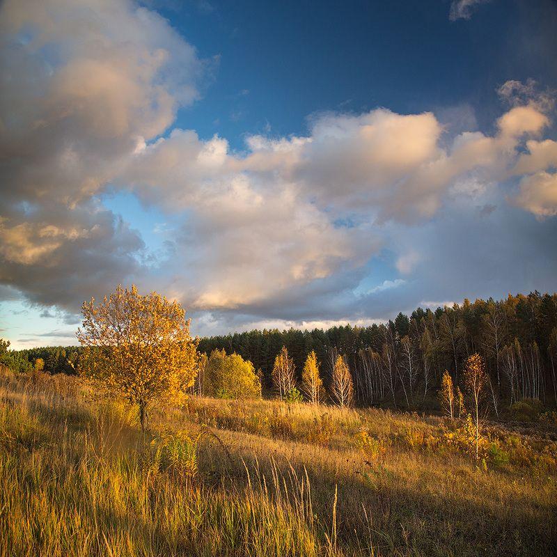 осень, золотая осень, березы, облака, небо Дыхание осениphoto preview