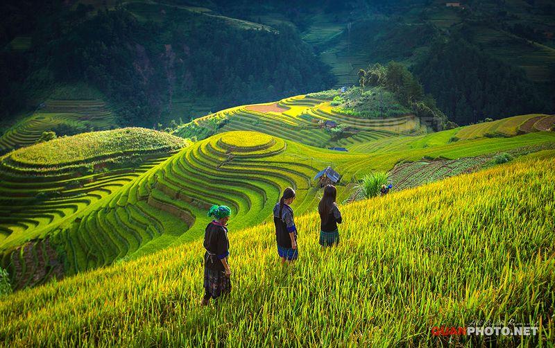 quanphoto, landscape, nature, rice, terraces, fields, valley, sunlight, slopes, mountains, people, children, farmland, agriculture, mucangchai, yenbai, vietnam Mu Cang Chai Rice Terracesphoto preview