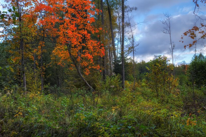 осень, лес, ненастно, Осень...photo preview