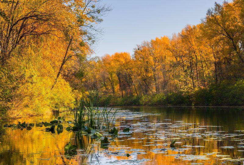 лес речка осень октябрь вода Бабье лето в октябреphoto preview