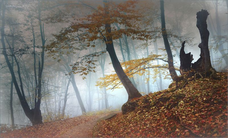 Мистический лес 17photo preview