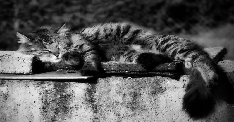 кошки Вечер трудного дня.photo preview