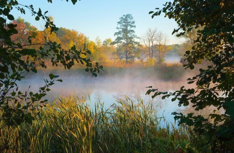 morning, sunrise, fog, autumn, осень, рассвет, туман, озеро, вода, дерево, окно windowphoto preview