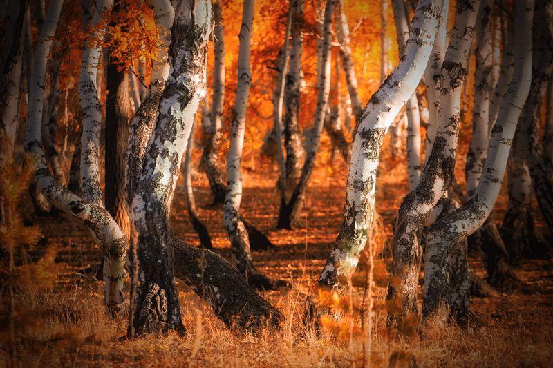 Лес степных ветровphoto preview