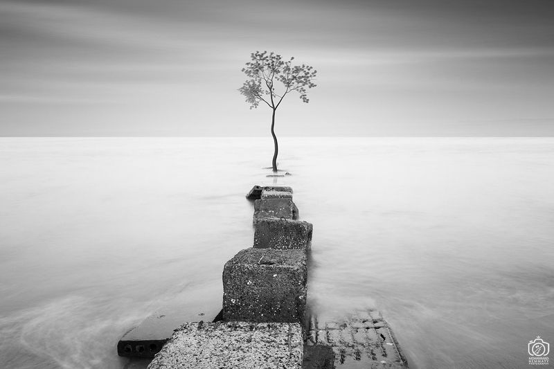 longexposure,photo,photography,tree,fineart,dream,sky,sea,canon,canon80d,canonphotography,blackandwhite,nature,clouds Tree and Seaphoto preview