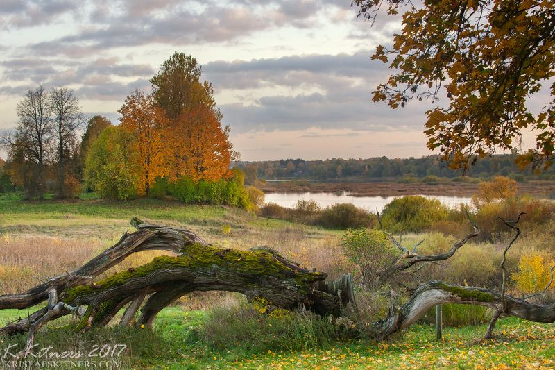 river branch grass field bush autumn tree leaf fevening sky clouds Autumn And Fallen Treephoto preview