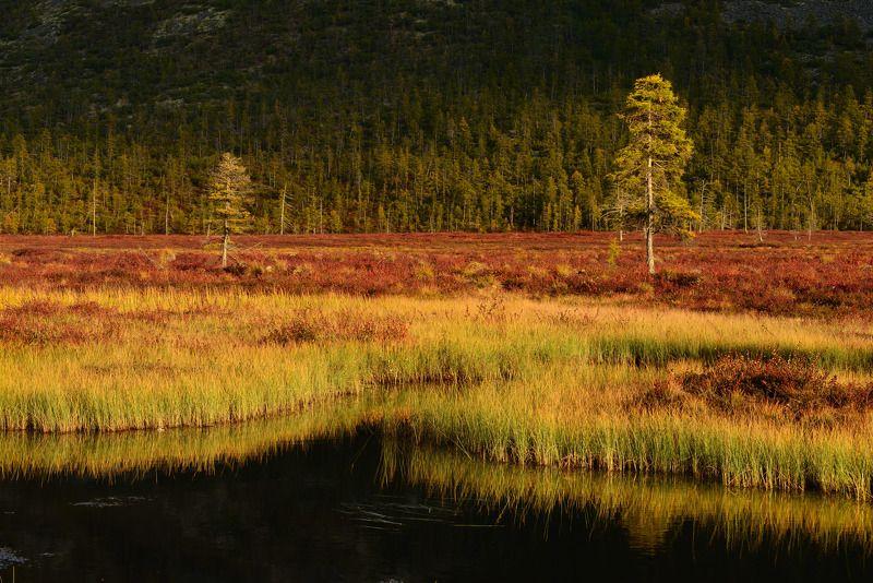 Ранняя осень на Колымеphoto preview