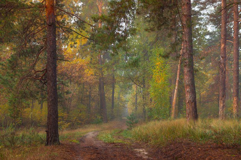 лес осень октябрь Лес, точно терем расписнойphoto preview