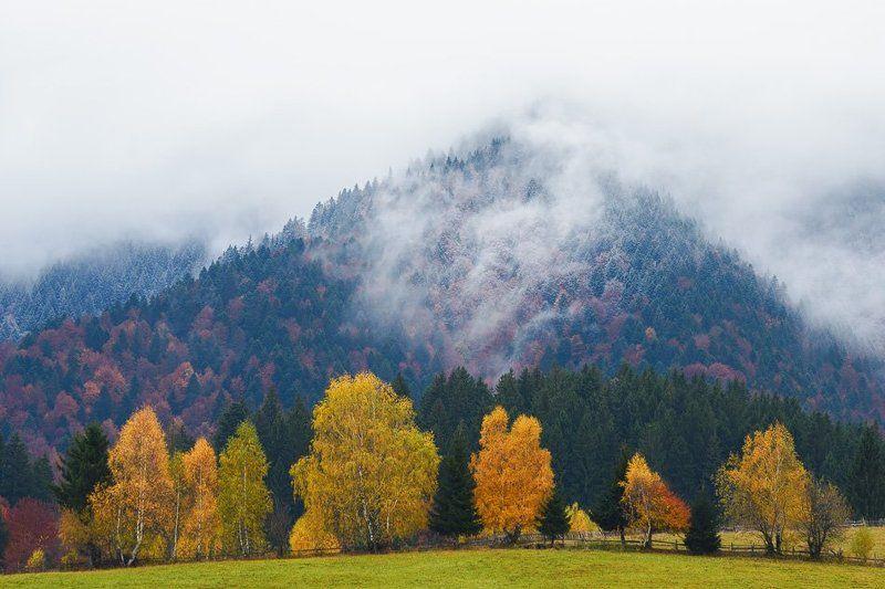 Autumn 2016photo preview
